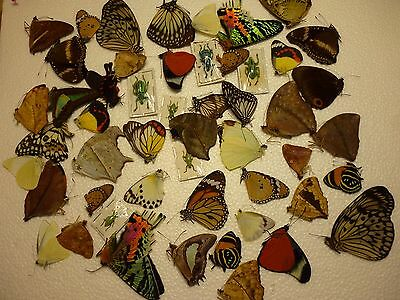 Real Dried Insect/Moth/Butterfly Non Set World mix 45 + Butterflies & Beetles