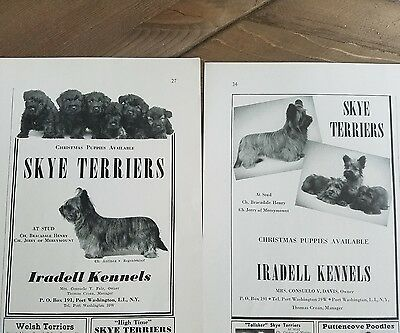 1939 1940 Skye Terriers terrier dog Iradell kennels ad