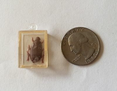 Cracker Jack Gumball Premium Toy Prize Roach in Case Plastic Charm