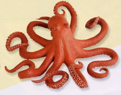 7 Inch Pacific Octopus