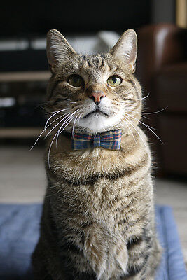 Checkered pattern cat bow tie with leather collar or Breakaway collar