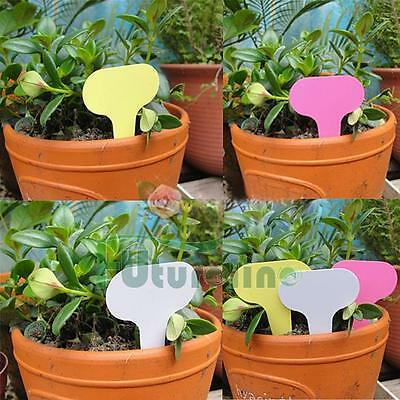 50pcs 6 x10cm Plastic Plant T-type Tags Markers Nursery Garden Labels Gray AU