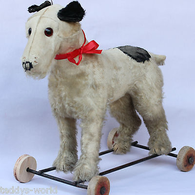 ANTIQUE STEIFF FOX TERRIER ON WHEELS 1930s w VOICE ❤️ ❤ ❤️ RIDING OR PULL BEHIND