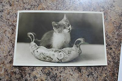 Vintage Real Photo Cat In A Vase-Clifton's Pacific Sea Cafe