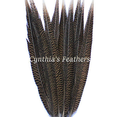 """Pheasant Feathers Natural Golden Pheasant Tail Feathers 10 Pieces 14-16"""" Long"""
