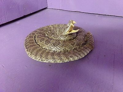 Real Western rattlesnake mount tanned hide taxidermy snake man cave stuffed