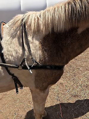 Smuckers Med Pony Harness