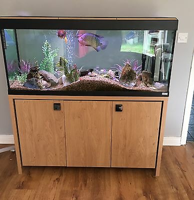 Fluval Roma 240 aquarium Fish Tank And Cabinet With Fish And Accessories