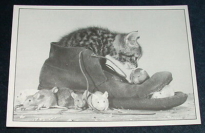 Tabby Kitten In Old Boot With Seven Mice Vintage Black And White Postcard Mouse