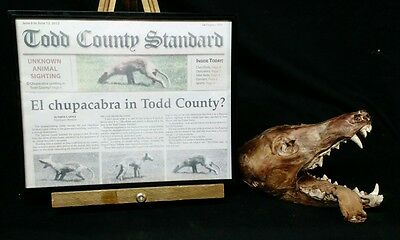 Rare Mummified Chupacabra Head,sideshow Gaff Taxidermy,curio,myth,ooak,freak,odd