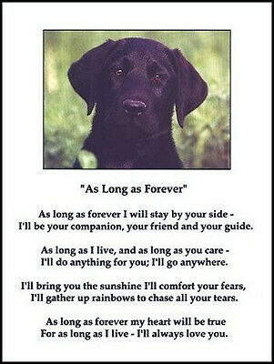 """Beautiful BLACK LAB print """"AS LONG AS FOREVER"""" art poem Labrador photo sign NEW!"""