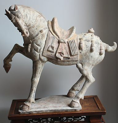 Chinese Tang Dynasty Painted Prancing Horse With Tl Test