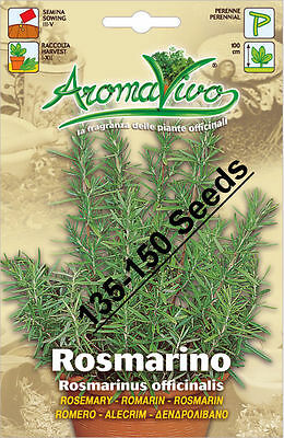 Rosemary  Herb Seeds (135 - 150 seeds) Superior Quality Very Fresh seeds.