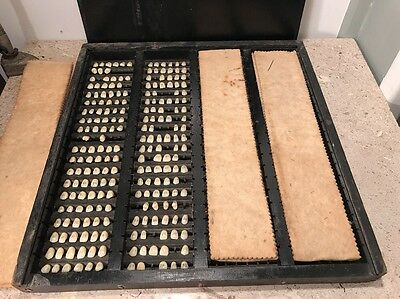 Antique Human Tooth Dentistry Display In Wooden Box