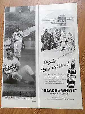 1959 Black White Scottish Scotty Terrier Westie Ad Popular Sea Coast