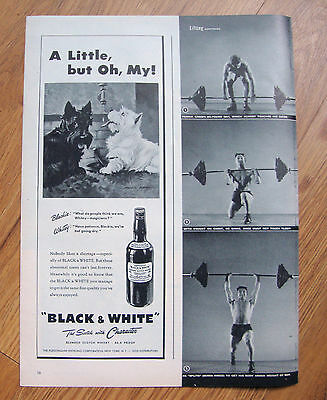 1945 Black White Scottish Scotty Terrier Westie Ad A Little But Oh My