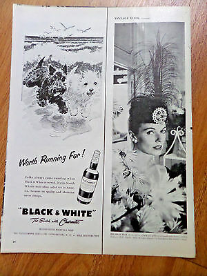 1956 Black White Scottish Scotty Terrier Westie Ad Ocean Beach Waves