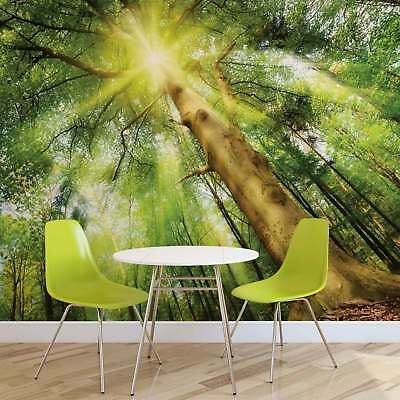 WALL MURAL PHOTO WALLPAPER XXL Forest Tree Sunbeams Nature (10112WS)