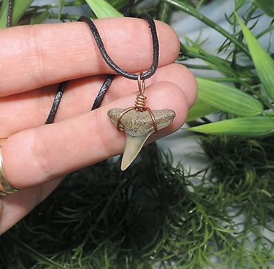 Nice 7/8'' Sharks Tooth Necklace/jewelry/megalodon Fossil Sharks Teeth