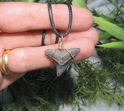 15/16'' Nice Sharks Tooth Necklace/jewelry/megalodon Fossil Sharks Teeth