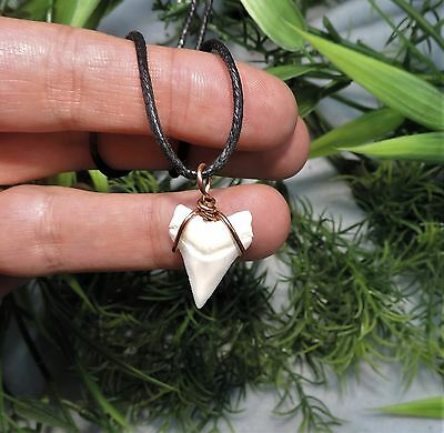 15/16'' Nice Sharks Tooth Necklace /jewelry/megalodon Fossil Sharks Teeth