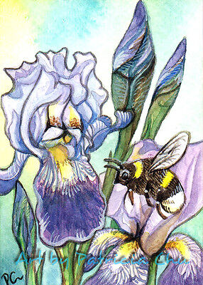 "ACEO LE Art Card Print 2.5""x3.5"" "" Bumblebee And Irises "" Art by Patricia"