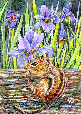 "ACEO LE Art Card Print 2.5""x3.5"" "" Chipmunk and Irises "" Animal Art by Patricia"