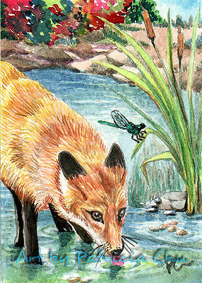 "ACEO LE Art Card Print 2.5""x3.5"" "" Fox Thirsty "" Animal Art by Patricia"