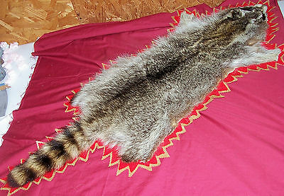 Raccoon Skin Fur Pelt Hide Taxidermy Taxidermied Flat Wall Mount Mounted Coon
