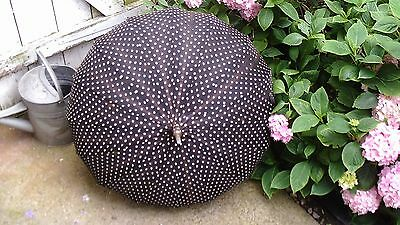 Antique Edwardian Ladies Parasol - Black Polka Dot