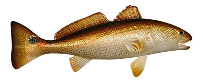 Replica Red Drum Fish Ocean Restaurant Wall Decor 28 inch