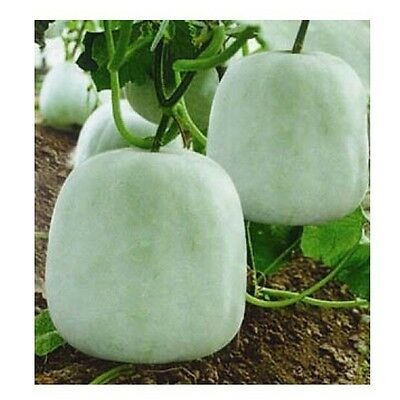small melon bell,china waxgourd seed,Original Package about 20 particles