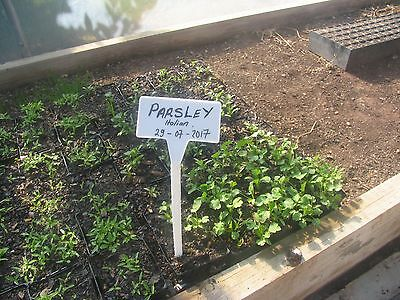 Plant Labels - 30cm high with 4.5 x 9cm area for text