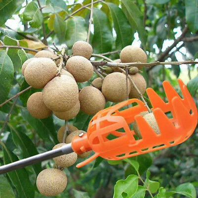 1Piece Plastic Fruit Picker without Pole Fruit Catcher Gardening Picking Tools G