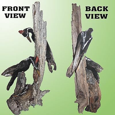 Exceptional Driftwood Sculpture Of A Pileated Woodpecker Family On A Tree Stump