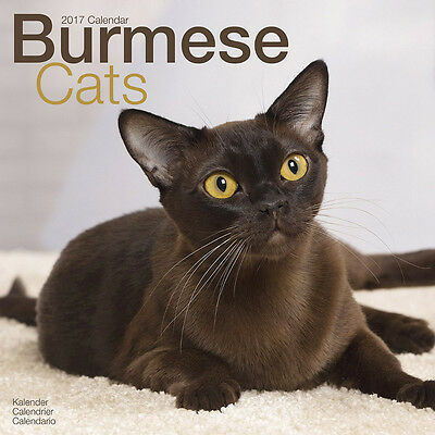 "Burmese Cats 2017 Wall Calendar by Avonside (12"" x 24"" when opened)"