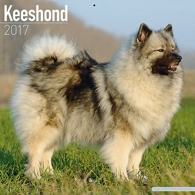 "Keeshond 2017 Wall Calendar by Avonside (12"" x 24"" when opened)"