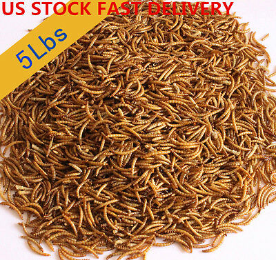 US Stock Hotsale 5Lbs Bulk Dried Mealworms Treats for Chickens Fish wild Birds