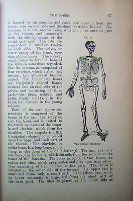 ~Rare 1896 Antque Homeopathy Herbal Apothecary Medical Book Anatomy Surgery