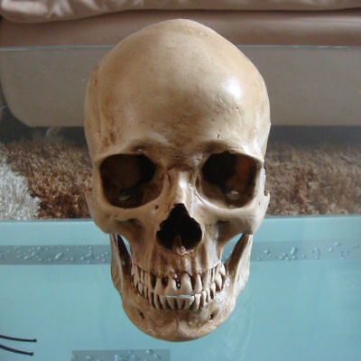 1:1 Realistic Human Skull Head Resin Halloween Party Haunt Stage Prop Decoration