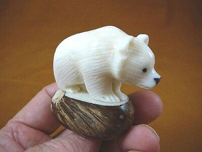 TNE-BEA-GR-651A)  white albino Grizzly BEAR TAGUA NUT Figurine Carving Vegetable