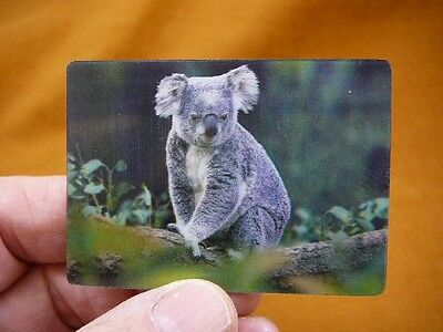 (MAG-4) 3D Fridge refrigerator photo Koala bear on eucalyptus tree love koalas