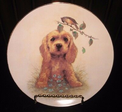 What's Up? by Joseph Giordano First Impressions Plate Cute Cocker Spaniel Puppy