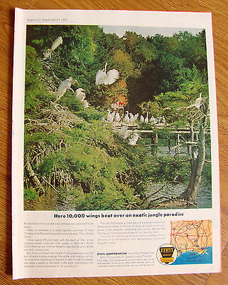 1962 Ethyl Gasoline Ad Avery Island West of New Orleans LA