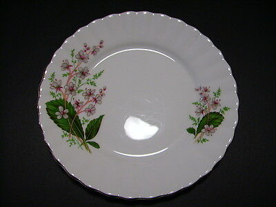 Salisbury Bone China Made in England - orphan side plate