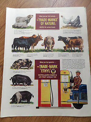 1948 Ethyl Gasoline Ad  Breeds of Farm Animals Bulls Cattle Hogs Sheeps Cows