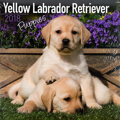 "Yellow Labrador Retriever Puppies 2018 Wall Calendar by Turner (12"" x 24"" open)"
