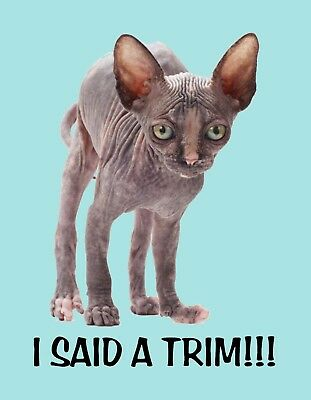 METAL MAGNET HAIRLESS Sphinx Cat Tan Gray White Background
