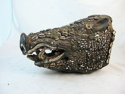 Wild Boar's Skull Decorated With Shells From Papua New Guinea C1880'S
