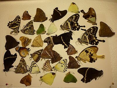 Real Butterfly/Moth/Insect non set..33 + x African species Butterflies  B2741